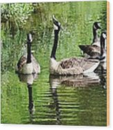 Geese And Green Wood Print