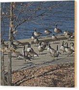 Geese At Port Landing Wood Print
