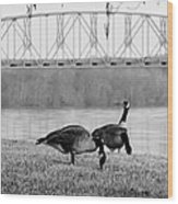 Geese By The Ohio Wood Print