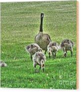Geese Hdr Wood Print