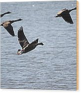 Geese In Flight Wood Print