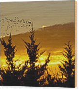 Geese In Golden Sunset Wood Print