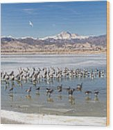 Geese On Ice  Wood Print