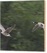 Geese Pair In Flight Wood Print