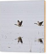 Geese Reflections Wood Print