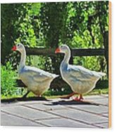 Geese Strolling In The Garden Wood Print by Tracie Kaska