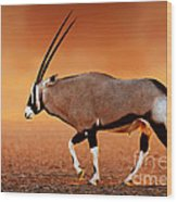 Gemsbok On Desert Plains At Sunset Wood Print