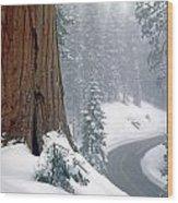 2m6836-generals Highway In The Giant Sequoias Wood Print
