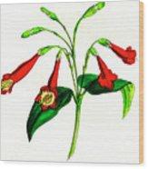 Gentian (lisianthus Puleber) Wood Print