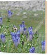 Gentian Wildflowers Wood Print