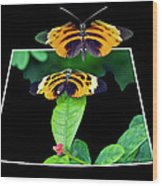 Gentle Butterfly Courtship 01 Out Of Bounds Wood Print