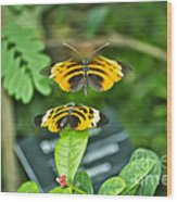 Gentle Butterfly Courtship 01 Wood Print