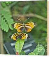 Gentle Butterfly Courtship 02 Wood Print