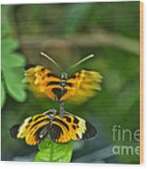 Gentle Butterfly Courtship 03 Wood Print