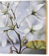 Gentle White Spring Flowers Wood Print