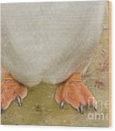 Gentoo Penguin Feet Wood Print