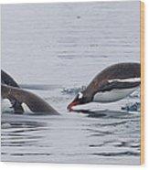Gentoo Penguins Porpoising Paradise Bay Wood Print