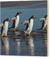 Gentoo Penguins Walking Wood Print by Hiroya Minakuchi
