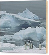Gentoo Penguins With Icebergs Antarctica Wood Print