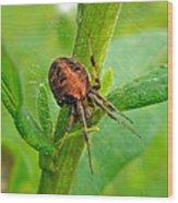 Genus Araneus Orb Weaver Spider - Brown And Orange Wood Print