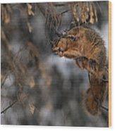 George Eating Maple Seeds In Winter Wood Print