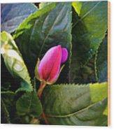 Geranium Bud Wood Print
