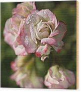 Geranium Flowers Wood Print