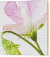 Geranium Pink Wood Print