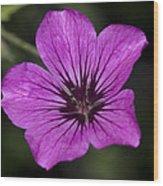Geranium Sanguinium Wood Print