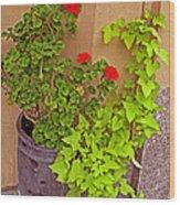Geraniums And Ivy Wood Print