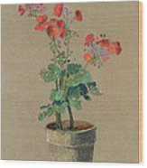 Geraniums In A Pot  Wood Print