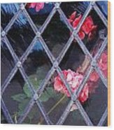Geraniums Under Glass In Wales Wood Print