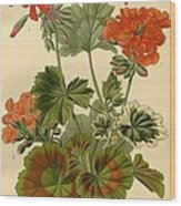 Geraniums Wood Print by Philip Ralley