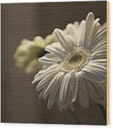 Gerber Daisy Flower  Wood Print