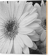 Gerber Daisies In Black And White Wood Print