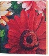 Gerber Daisies In Bloom Wood Print