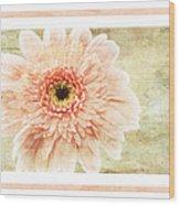 Gerber Daisy 1 Wood Print