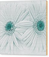 Gerber Daisy Flowers In Teal Wood Print