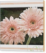 Gerber Daisy Love 5 Wood Print