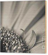 Gerbera Blossom - Bw Wood Print
