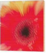 Gerbera Daisy Abstract Wood Print