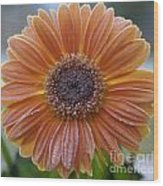 Gerbera Daisy Covered In Frost Wood Print