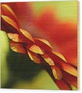 Gerbera Daisy Flower II Wood Print by Natalie Kinnear