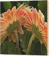 Gerbera Daisy Twins Wood Print