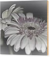 Gerbera Dream 1 Wood Print