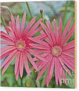 Gerbera Jamesonii / Pink Daisy Flowers Wood Print