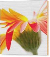 Gerbera Mix Crazy Flower - Orange Yellow Wood Print