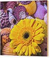 Gerbera With Seashells Wood Print