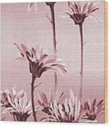 Gerberas Wood Print