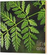 Gereric Vegetation Wood Print